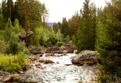 tributary, forest, river, norway, nature, rocks wallpaper