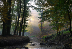 autumn, forest, sun rays, nature, river wallpaper