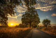 nature, landscape, field, road, trees, sunset wallpaper