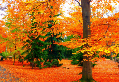 autumn, park, bench, tree, nature wallpaper