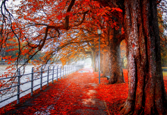 nature, autumn, park, trees, alley, path, river, fence wallpaper