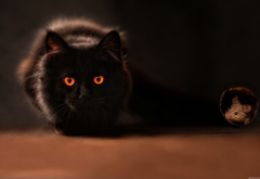 cat, black cat, mouse, animals wallpaper