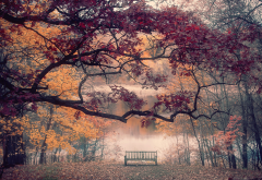 nature, landscape, autumn, park, trees, branches, lake, river, bench wallpaper