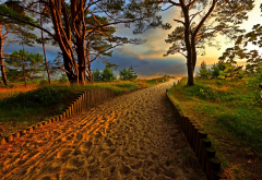 nature, landscape, coast, sand, trees, path, evening, sunset wallpaper