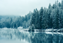 winter, snow, nature, lake, frost, tree wallpaper