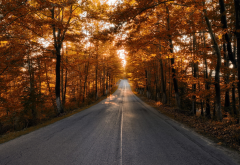 road, autumn, trees, leaf, nature wallpaper