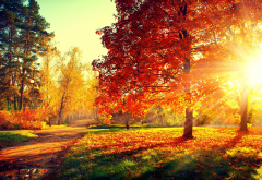 nature, autumn, park, trees, grass, path, sun rays wallpaper