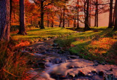 nature, landscape, forest, autumn, stream, sunset wallpaper