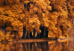 red, autumn, trees, nature, lake wallpaper