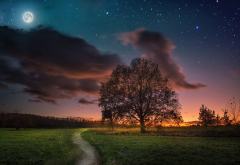 nature, moon, sunset, tree, clouds, stars, night wallpaper