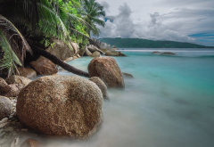tropics, ocean, palm trees, stones, sea, nature wallpaper