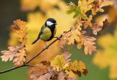 great tit, nature, autumn, branch, oak, leaves, bird, tit wallpaper