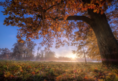 nature, autumn, landscape, park, tree, grass, leaves, pond, sun rays wallpaper