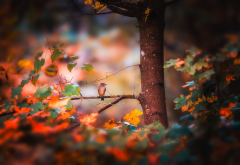 nature, autumn, tree, branches, leaves, bird wallpaper