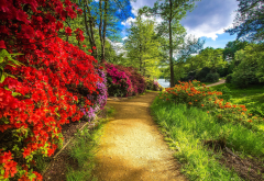 nature, park, trees, bushes, path, pond wallpaper