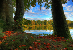nature, landscape, autumn, tree, forest, lake, grass, leaves wallpaper