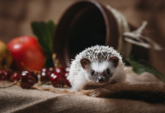 animals, hedgehog, pot, berries, cherry wallpaper