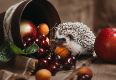 animals, hedgehog, pot, berries, apple, apricot, cherry, food wallpaper