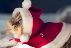 cat, christmas, new year, animals wallpaper
