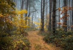 autumn, forest, path, trees, fog, nature wallpaper