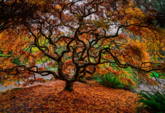 tree, branches, nature, autumn, leaves, leaf wallpaper