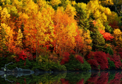 autumn, trees, nature, paint, forest wallpaper