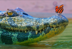 butterfly, crocodile, pond, animals wallpaper