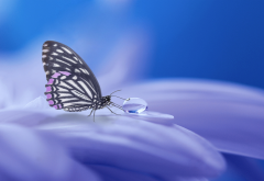 macro, flowers, petals, insect, butterfly, water drop, drop, animals, nature wallpaper