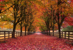 autumn, alley, nature, park, trees, fencing, foliage wallpaper