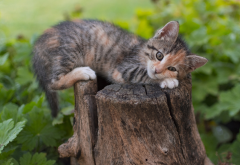 kitten, cat, animals, cute wallpaper